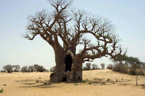 Ramas y raíces - IV